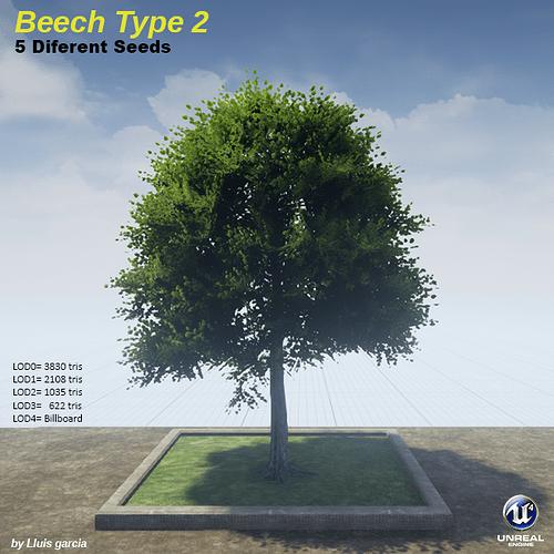 beechType2.png
