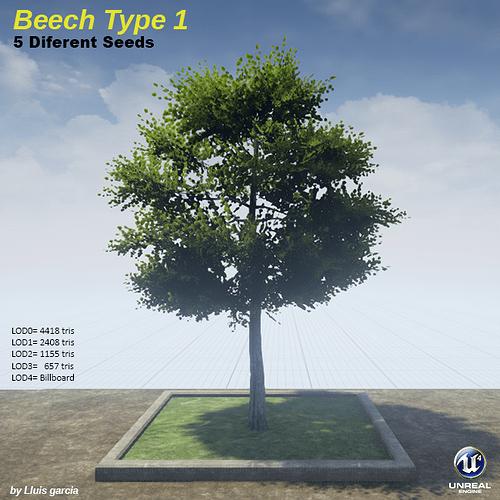 beechType1.png