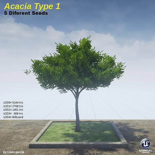 acaciaType1.png