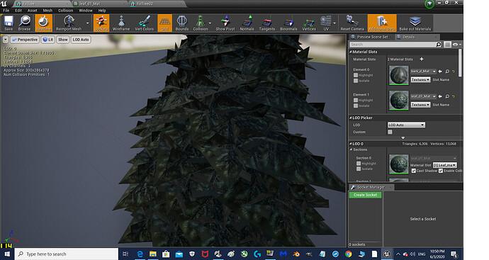 fir tree pic resized.jpg