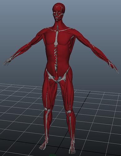 Anatomy06.jpg