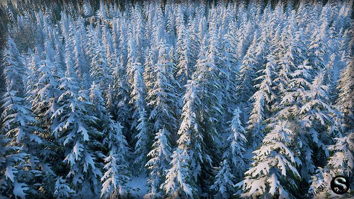 Winter_Nature05.jpg