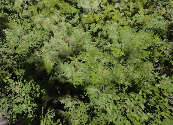 treeBAD.png